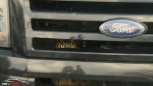 ¿Nuestro coche tiene ojos o hay un Búho atrapado bajo el capó ?