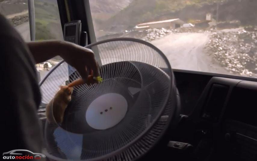 Un hamster conduce un camión Volvo por las montañas gallegas