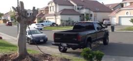 [Vídeo] ¿Arrancar un árbol con una pickup?: Nivel de jardinería avanzado, sólo expertos…