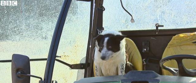Surrealista: Un perro toma los mandos del ATV de su dueño y lo estrella en una autopista