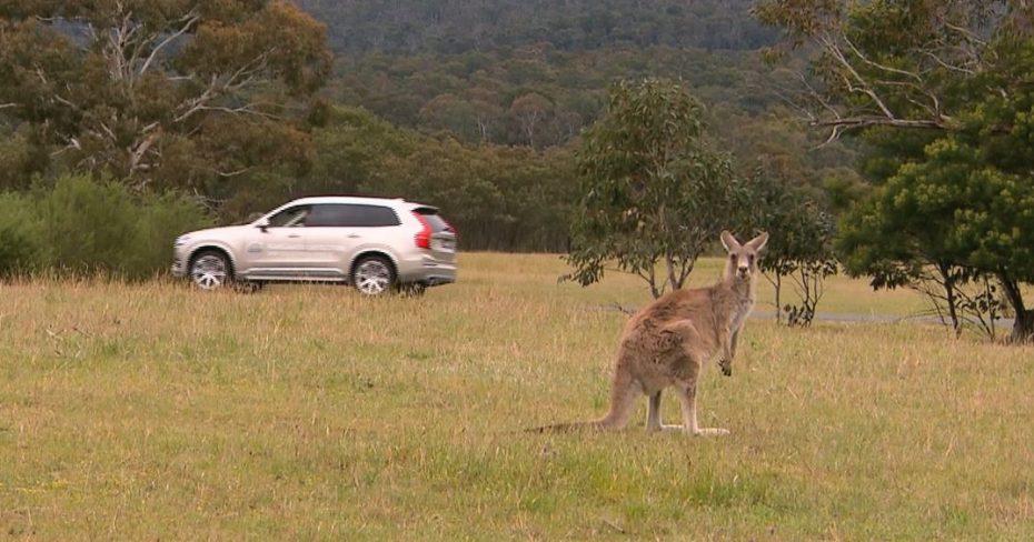 De la prueba del Alce al problema con los canguros: ¿Un sistema de detección de canguros?