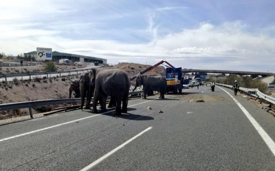 ¿Elefantes sueltos por una autovía en España? Parece una broma… pero es totalmente real