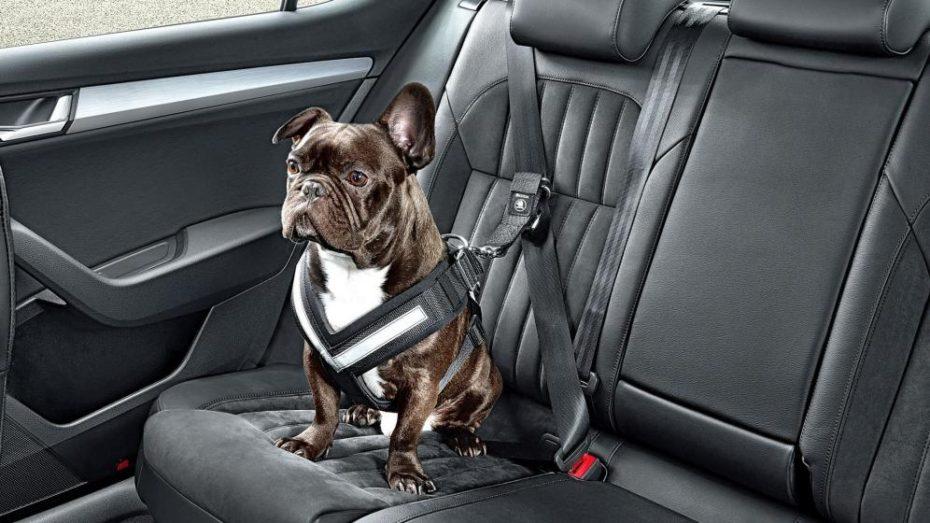 Cómo llevar al perro en el coche (y otras mascotas)
