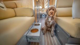 La caravana Bowlus Terra Firma le brinda el mismo lujo a tu perro que a ti