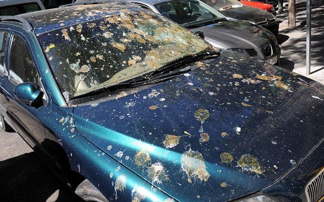 Si tienes un coche rojo, ten cuidado con los pájaros…