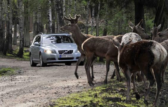 Volvo diseña un sistema para evitar los accidentes con animales